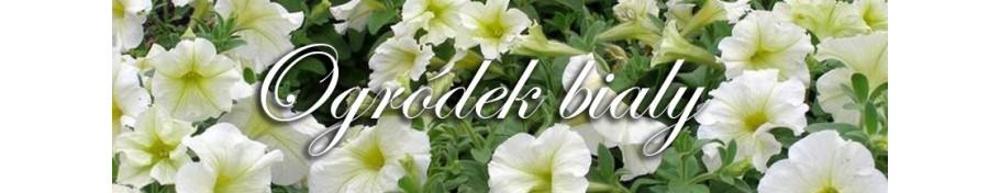 Ogródek biały