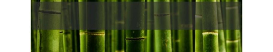 Phyllostachys Bambus