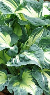 Ogródek zielony