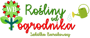 Rośliny od Ogrodnika - Byliny Barcikowscy
