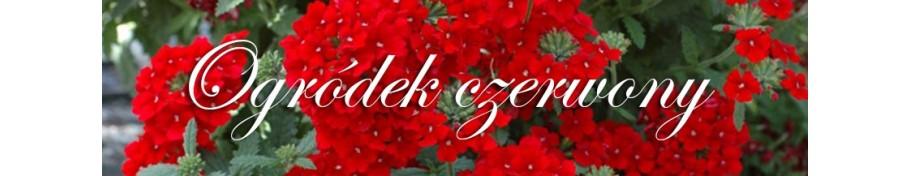 Ogródek czerwony
