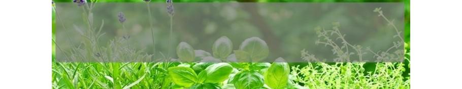 Rośliny lecznicze i zioła