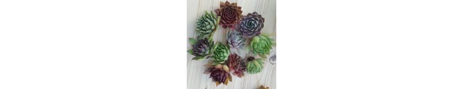 Rojniki - zestawy sadzonek luzem