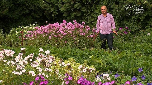 Maja w ogrodzie Barcikowscy
